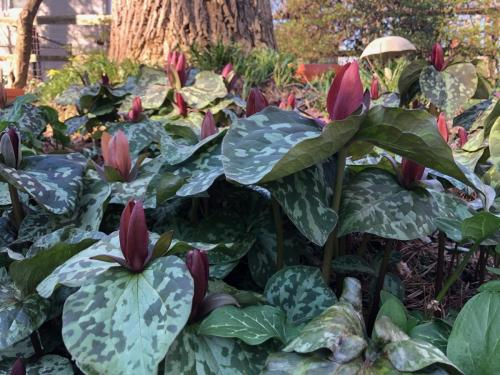 Root & Branch Gardens - Native Plants 6