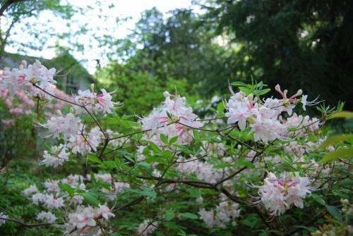 Root & Branch Gardens - Native Plants 7