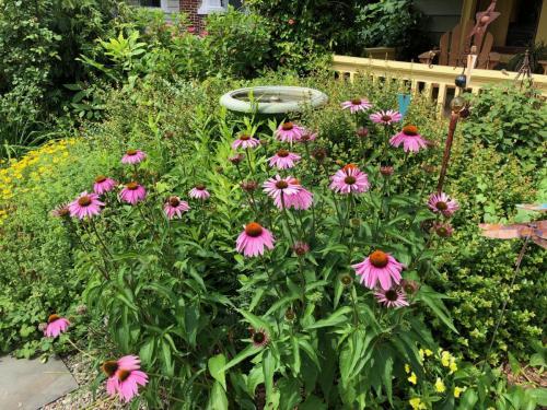 Root & Branch Gardens - Native Plants 4