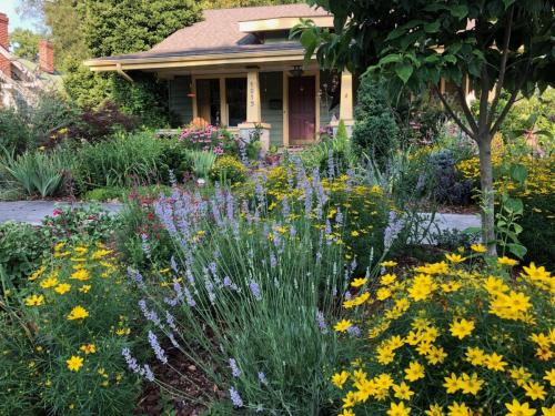 Root & Branch Gardens - Native Plants 5