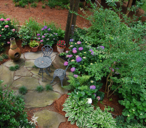 Root & Branch Gardens - Native Plants 8