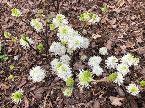 Root & Branch Gardens - Native Plants 10